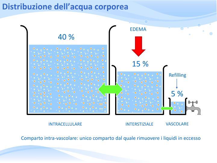Distribuzione dell'acqua corporea