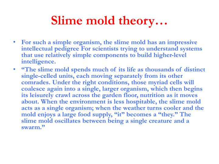 Slime mold theory…