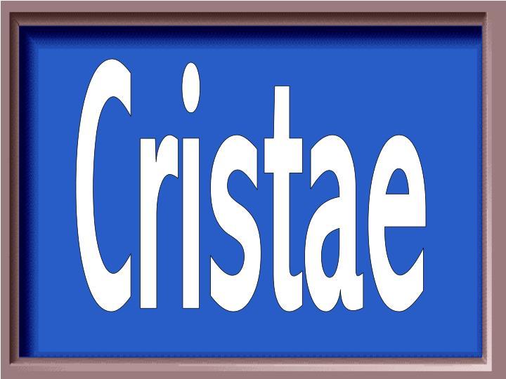 Cristae