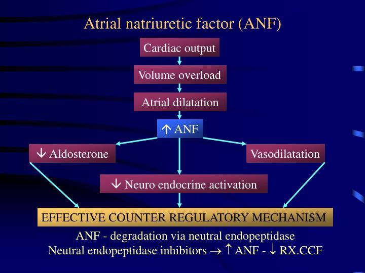 Atrial natriuretic factor (ANF)
