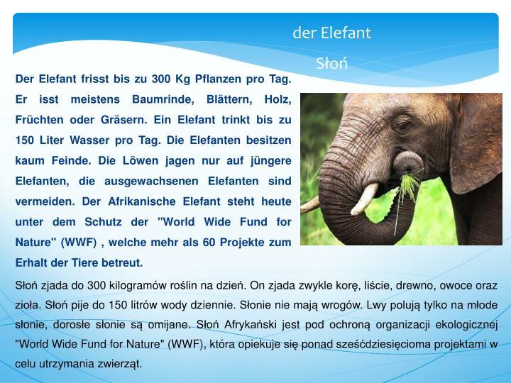 """Der Elefant frisst bis zu 300 Kg Pflanzen pro Tag. Er isst meistens Baumrinde, Blättern, Holz, Früchten oder Gräsern. Ein Elefant trinkt bis zu 150 Liter Wasser pro Tag. Die Elefanten besitzen kaum Feinde. Die Löwen jagen nur auf jüngere Elefanten, die ausgewachsenen Elefanten sind vermeiden. Der Afrikanische Elefant steht heute unter dem Schutz der """"World Wide Fund for Nature"""" (WWF) , welche mehr als 60 Projekte zum Erhalt der Tiere betreut."""