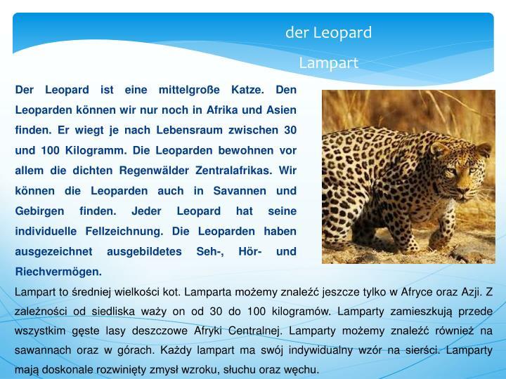 Der Leopard ist eine mittelgroße Katze. Den Leoparden können wir nur noch in Afrika und Asien finden. Er wiegt je nach Lebensraum zwischen 30 und 100 Kilogramm. Die Leoparden bewohnen vor allem die dichten Regenwälder Zentralafrikas. Wir können die Leoparden auch in Savannen und Gebirgen finden. Jeder Leopard hat seine individuelle Fellzeichnung. Die Leoparden haben ausgezeichnet ausgebildetes Seh-, Hör- und Riechvermögen.