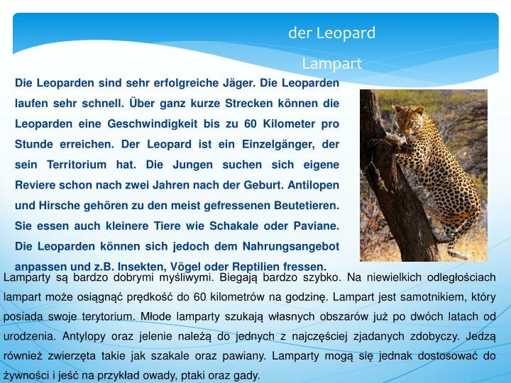 Die Leoparden sind sehr erfolgreiche Jäger. Die Leoparden laufen sehr schnell. Über ganz kurze Strecken können die Leoparden eine Geschwindigkeit bis zu 60 Kilometer pro Stunde erreichen. Der Leopard ist ein Einzelgänger, der sein Territorium hat. Die Jungen suchen sich eigene Reviere schon nach zwei Jahren nach der Geburt. Antilopen und Hirsche gehören zu den meist gefressenen Beutetieren. Sie essen auch kleinere Tiere wie Schakale oder Paviane. Die Leoparden können sich jedoch dem Nahrungsangebot anpassen und z.B. Insekten, Vögel oder Reptilien fressen.