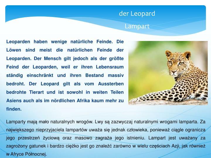 Leoparden haben wenige natürliche Feinde. Die Löwen sind meist die natürlichen Feinde der Leoparden. Der Mensch gilt jedoch als der größte Feind der Leoparden, weil er ihren Lebensraum ständig einschränkt und ihren Bestand massiv bedroht. Der Leopard gilt als vom Aussterben bedrohte Tierart und ist sowohl in weiten Teilen Asiens auch als im nördlichen Afrika kaum mehr zu finden.