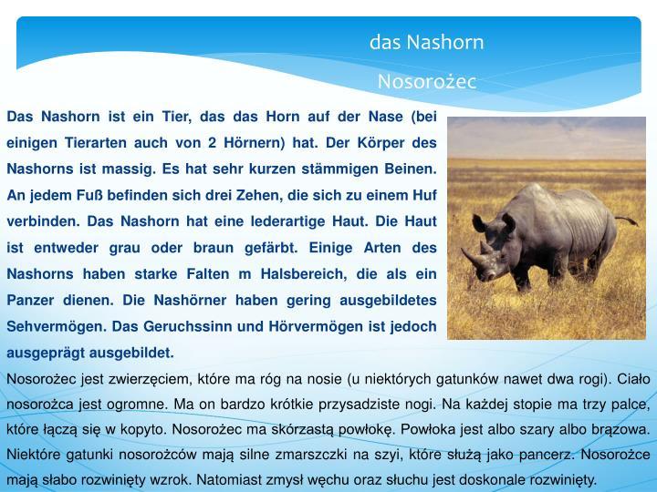 Das Nashorn ist ein Tier, das das Horn auf der Nase (bei einigen Tierarten auch von 2 Hörnern) hat. Der Körper des Nashorns ist massig. Es hat sehr kurzen stämmigen Beinen. An jedem Fuß befinden sich drei Zehen, die sich zu einem Huf verbinden. Das Nashorn hat eine lederartige Haut. Die Haut ist entweder grau oder braun gefärbt. Einige Arten des Nashorns haben starke