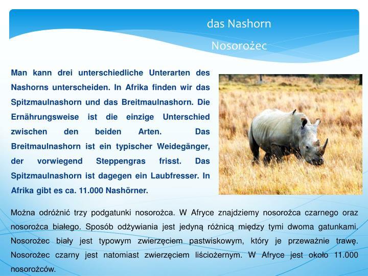 Man kann drei unterschiedliche Unterarten des Nashorns unterscheiden. In Afrika finden wir das Spitzmaulnashorn und das Breitmaulnashorn. Die Ernährungsweise ist die einzige Unterschied zwischen den beiden Arten.  Das Breitmaulnashorn ist ein typischer Weidegänger, der vorwiegend Steppengras frisst. Das Spitzmaulnashorn ist dagegen ein Laubfresser. In Afrika gibt es ca. 11.000 Nashörner.