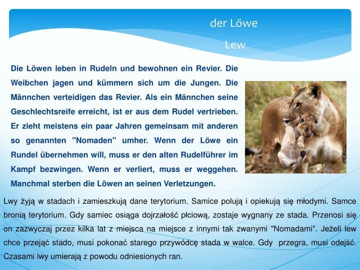 """Die Löwen leben in Rudeln und bewohnen ein Revier. Die Weibchen jagen und kümmern sich um die Jungen. Die Männchen verteidigen das Revier. Als ein Männchen seine Geschlechtsreife erreicht, ist er aus dem Rudel vertrieben.  Er zieht meistens ein paar Jahren gemeinsam mit anderen so genannten """"Nomaden"""" umher. Wenn der Löwe ein Rundel übernehmen will, muss er den alten Rudelführer im Kampf bezwingen. Wenn er verliert, muss er weggehen. Manchmal sterben die Löwen an seinen Verletzungen."""