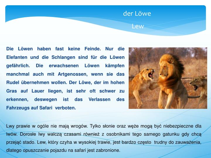 Die Löwen haben fast keine Feinde. Nur die Elefanten und die Schlangen sind für die Löwen gefährlich. Die erwachsenen Löwen kämpfen manchmal auch mit Artgenossen, wenn sie das Rudel übernehmen wollen. Der Löwe, der im hohen Gras auf Lauer liegen, ist sehr oft schwer zu erkennen, deswegen ist das Verlassen des Fahrzeugs auf Safari  verboten.
