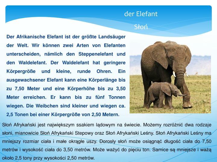 Der Afrikanische Elefant ist der größte Landsäuger der Welt. Wir können zwei Arten von Elefanten unterscheiden, nämlich den Steppenelefant und den Waldelefant. Der Waldelefant hat geringere Körpergröße und kleine, runde Ohren. Ein ausgewachsener Elefant kann eine Körperlänge bis zu 7,50 Meter und eine Körperhöhe bis zu 3,50 Meter erreichen. Er kann bis zu fünf Tonnen wiegen. Die Weibchen sind kleiner und wiegen ca. 2,5 Tonen bei einer Körpergröße von 2,50 Metern.
