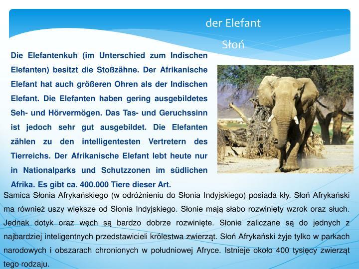 Die Elefantenkuh (im Unterschied zum Indischen Elefanten) besitzt die Stoßzähne. Der Afrikanische Elefant hat auch größeren Ohren als der Indischen Elefant. Die Elefanten haben gering ausgebildetes Seh- und Hörvermögen. Das Tas- und Geruchssinn ist jedoch sehr gut ausgebildet. Die Elefanten zählen zu den intelligentesten Vertretern des Tierreichs. Der Afrikanische Elefant lebt heute nur in Nationalparks und Schutzzonen im südlichen Afrika. Es gibt ca. 400.000 Tiere dieser Art.