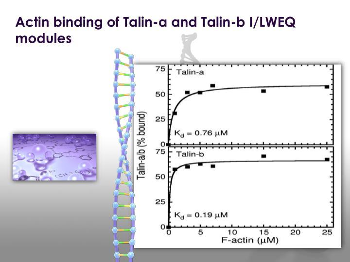 Actin binding of Talin-a and Talin-b I/LWEQ modules