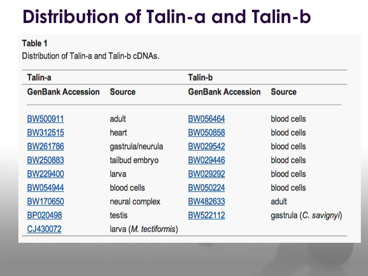 Distribution of Talin-a and Talin-b