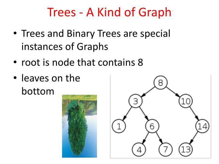 Trees - A Kind of Graph