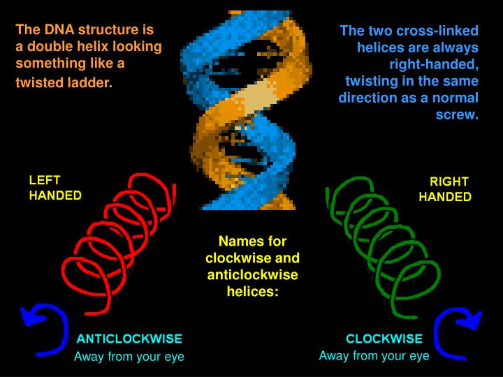 The DNA structure is a double helix looking something like a twisted ladder.