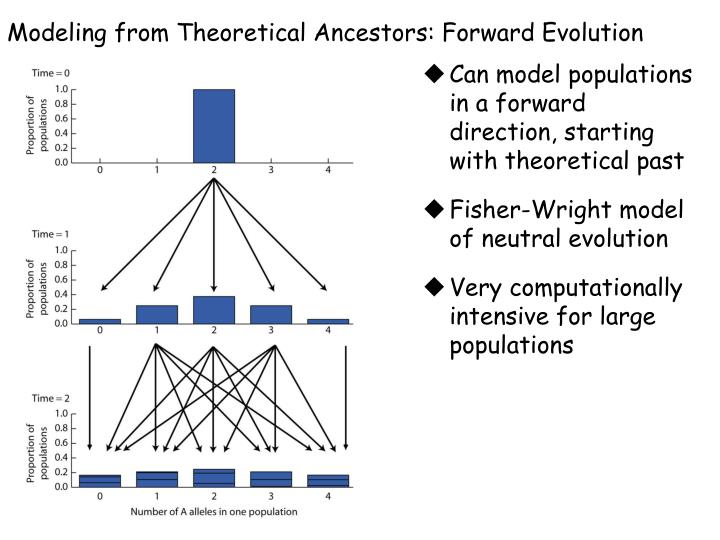 Modeling from Theoretical Ancestors: Forward Evolution