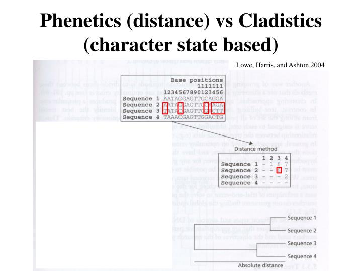 Phenetics (distance) vs Cladistics (character state based)