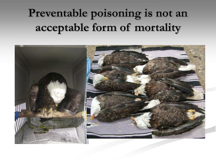 Preventable poisoning is not an acceptable form of mortality