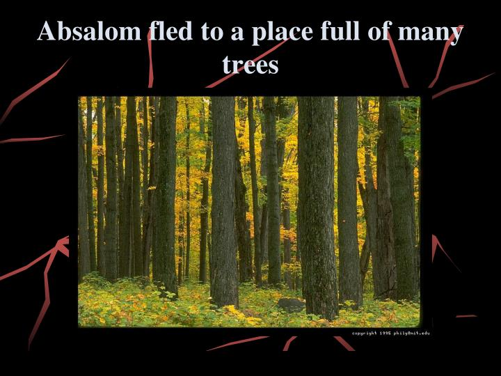 Absalom fled to a place full of many trees