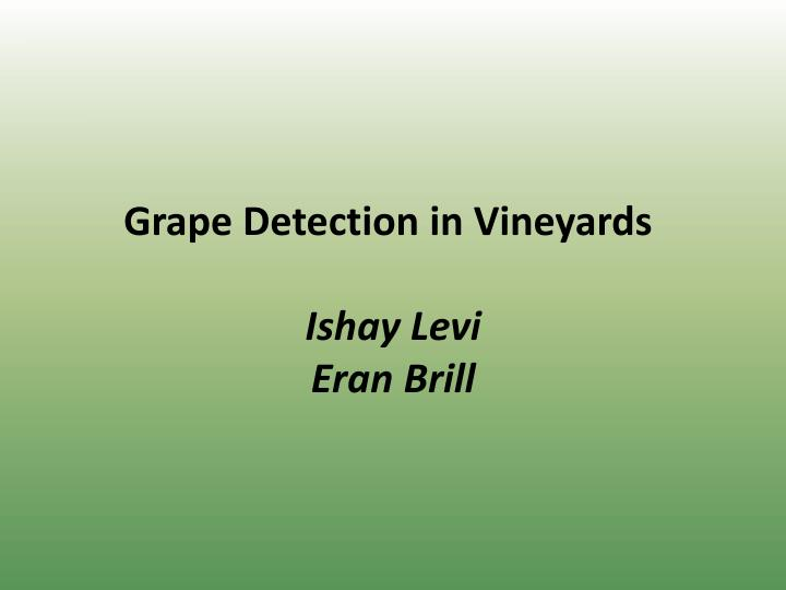 Grape Detection in Vineyards