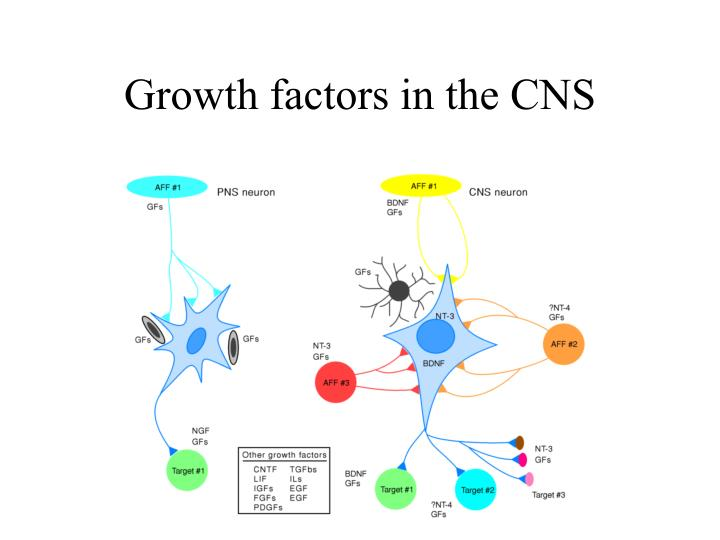 Growth factors in the CNS