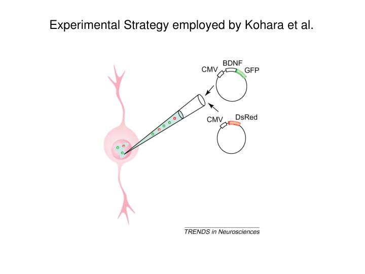 Experimental Strategy employed by Kohara et al.