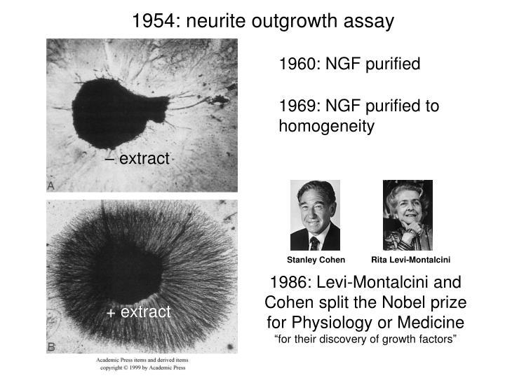 1954: neurite outgrowth assay