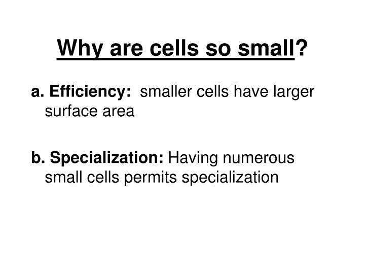 Why are cells so small