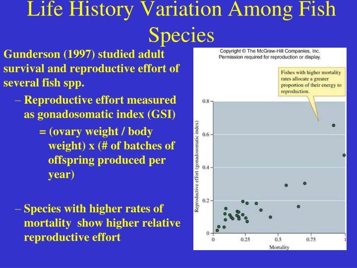 Life History Variation Among Fish Species
