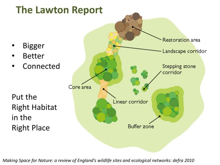 The Lawton