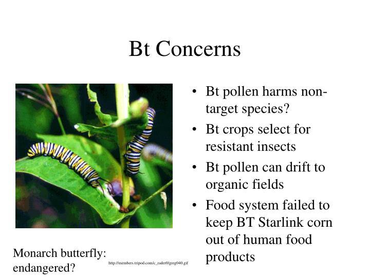 Bt Concerns
