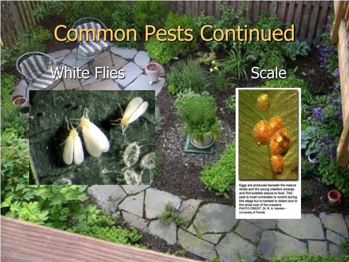 Common Pests Continued