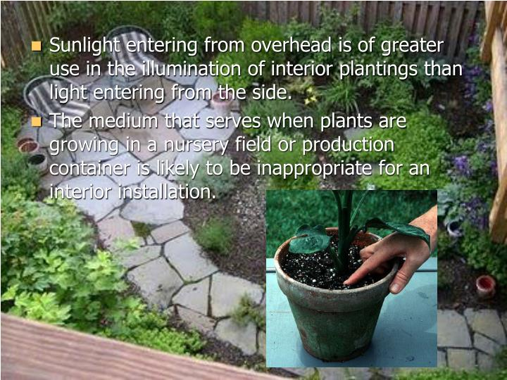 Sunlight entering from overhead is of greater use in the illumination of interior plantings than light entering from the side.