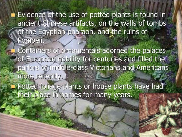 Evidence of the use of potted plants is found in ancient Chinese artifacts, on the walls of tombs of...