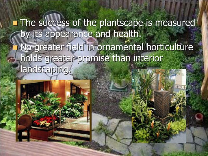 The success of the plantscape is measured by its appearance and health.