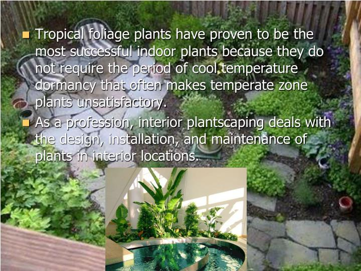 Tropical foliage plants have proven to be