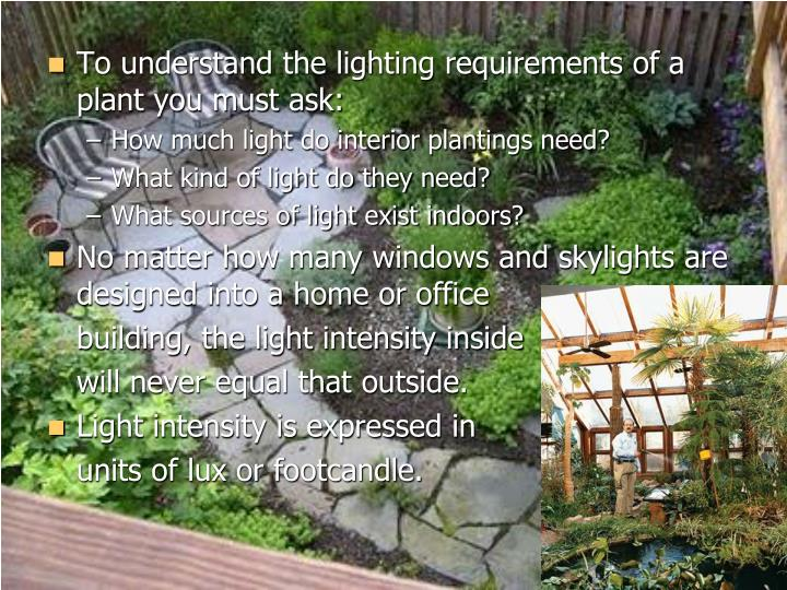 To understand the lighting requirements of a plant you must ask: