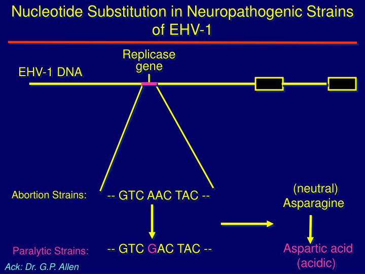 Nucleotide Substitution in Neuropathogenic Strains of EHV-1