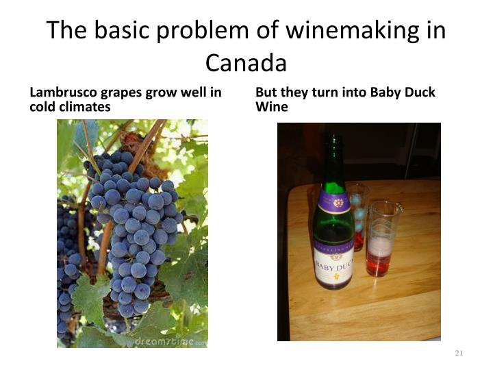 But they turn into Baby Duck Wine