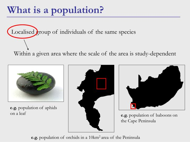Within a given area where the scale of the area is study-dependent