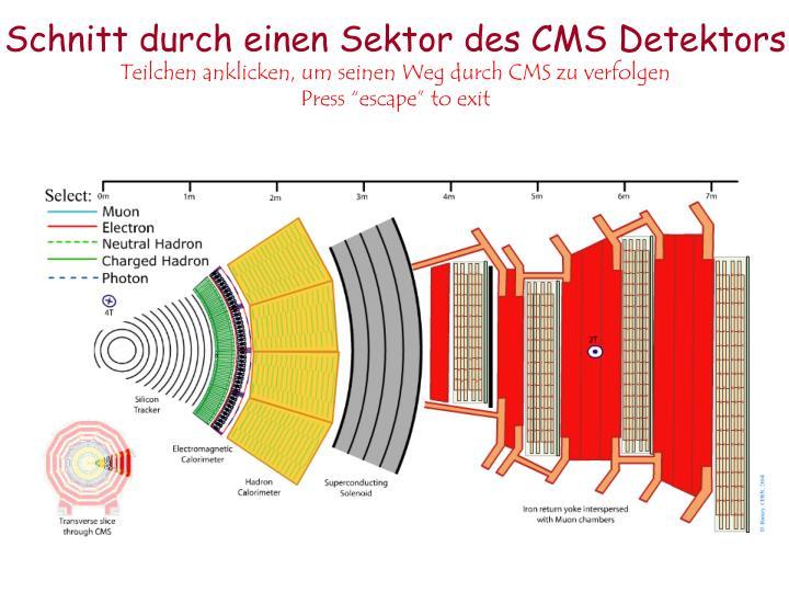 Schnitt durch einen Sektor des CMS Detektors
