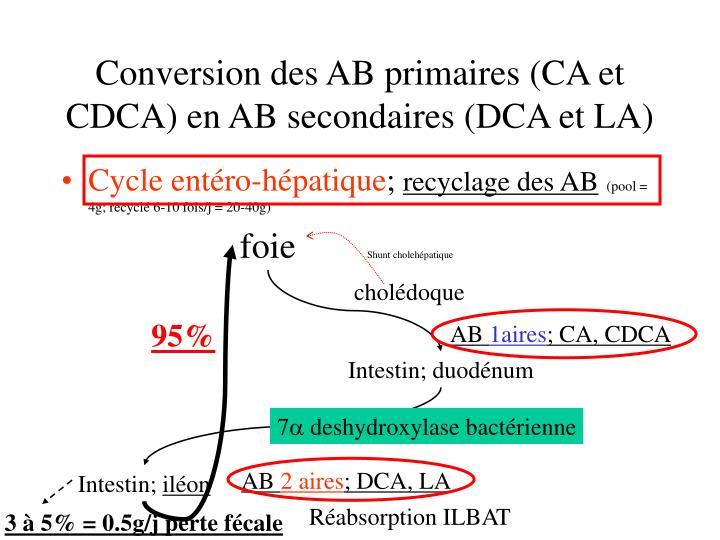 Conversion des AB primaires (CA et CDCA) en AB secondaires (DCA et LA)