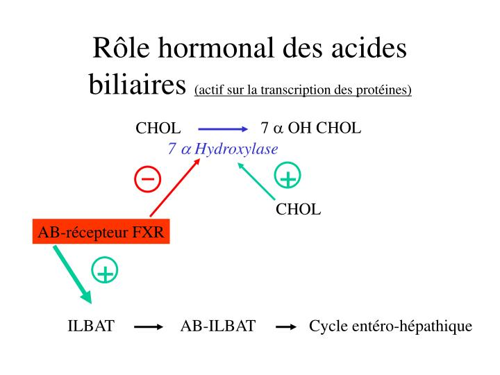 Rôle hormonal des acides biliaires
