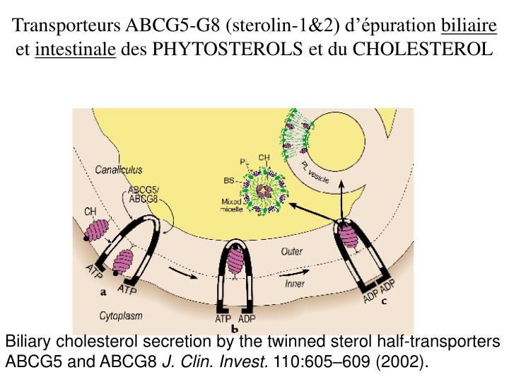 Transporteurs ABCG5-G8 (sterolin-1&2) d'épuration