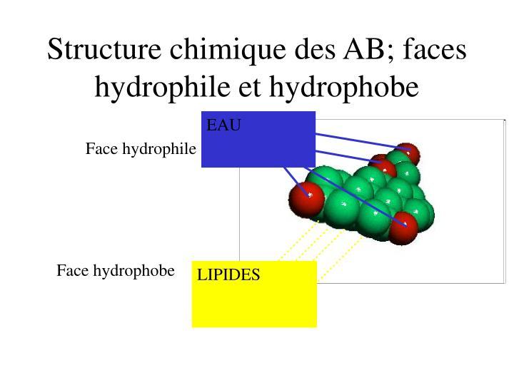 Structure chimique des AB; faces hydrophile et hydrophobe