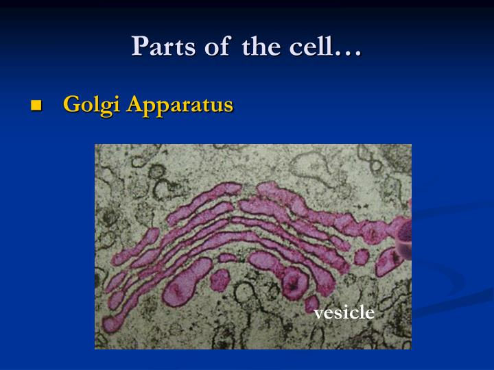 Parts of the cell…