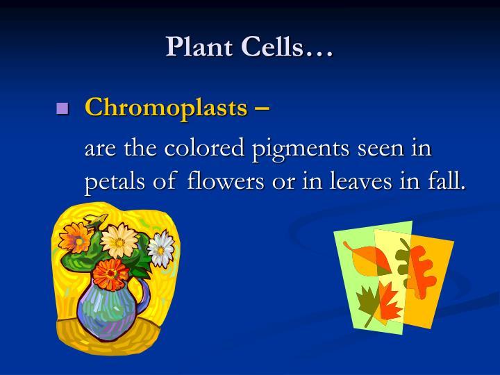 Plant Cells…