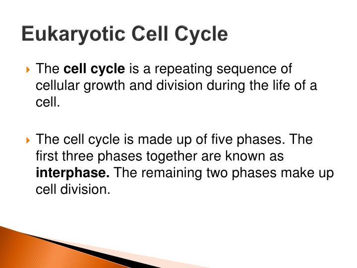 Eukaryotic Cell Cycle