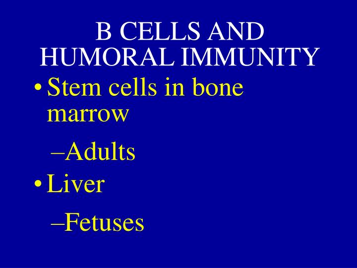 B CELLS AND HUMORAL IMMUNITY