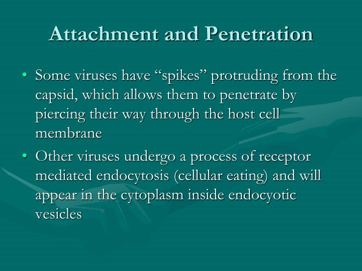Attachment and Penetration