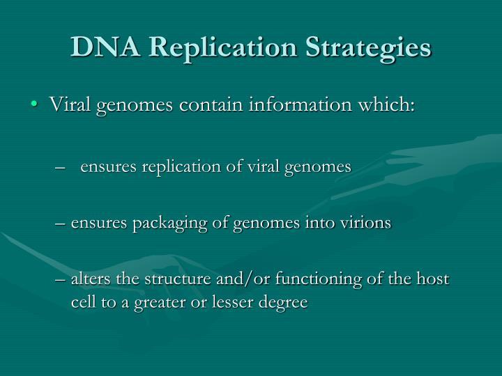 DNA Replication Strategies